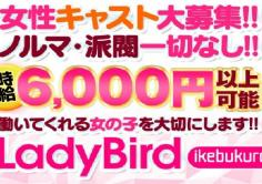 Ladybird(レディバード)の紹介