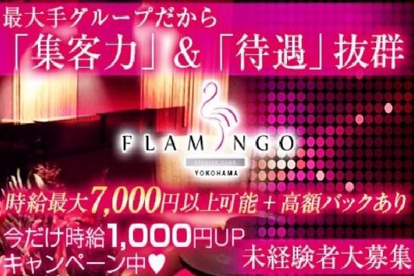 横浜FLAMINGO(ヨコハマフラミンゴ)の紹介0