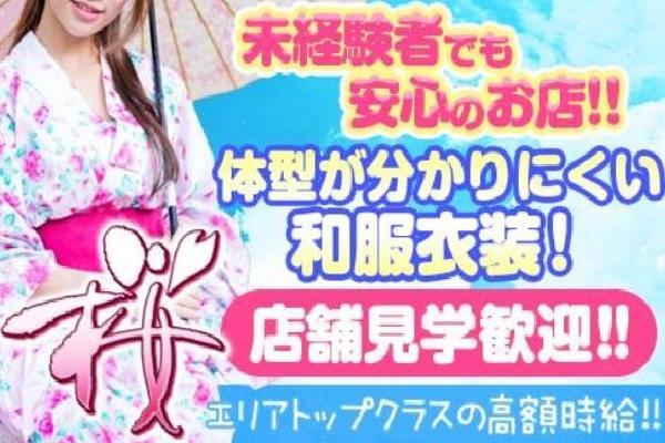桜 SAKURA(サクラ)の紹介0
